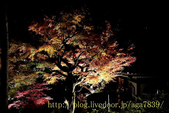 IMG_3065