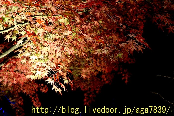 IMG_3053