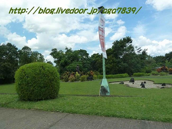 P11305361