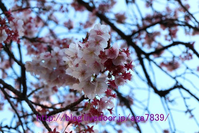 IMG_5163