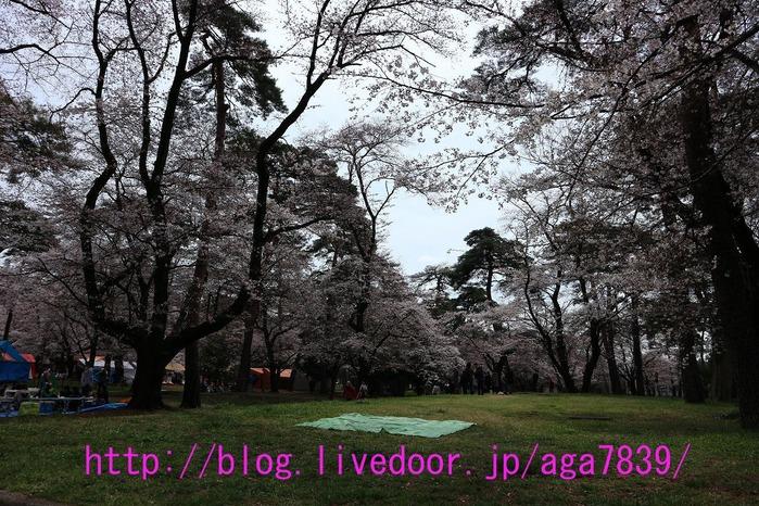 IMG_8781