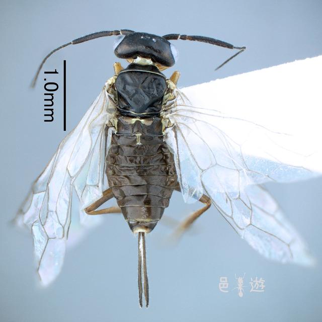 Naginata-
