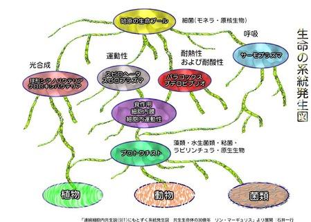 系統発生図4