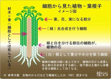 植物の芯-葉根子3文字入2