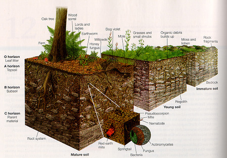 soil999