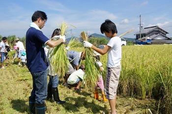 稲刈り01 (1)