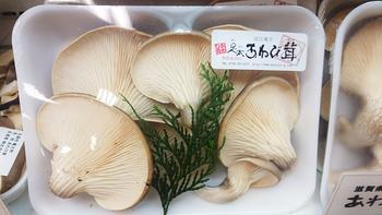 足太あわび茸(滋賀竜王) (3)