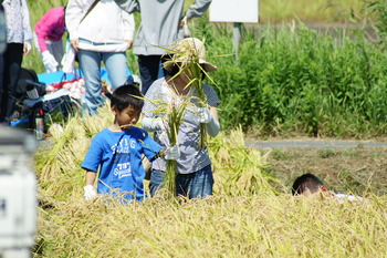 アグリパーク竜王稲刈り体験 (4)