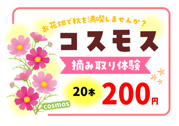 Microsoft Word - コスモス☆価格POP