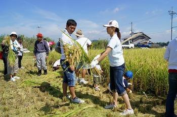 稲刈り01 (2)