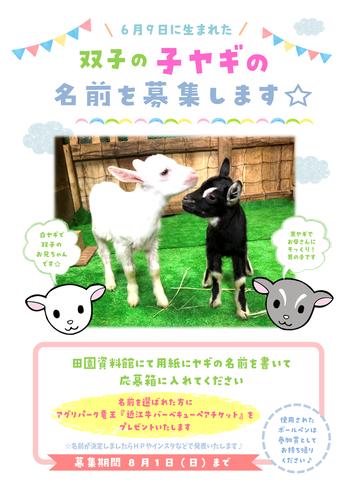 Microsoft Word - 子ヤギ名前募集ポスター(直売所用)