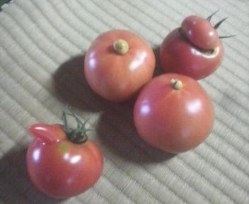 tomato2011072015330000