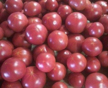 tomatoshugou1
