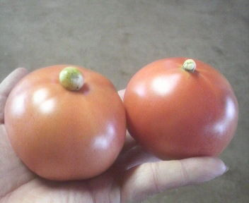 tomato2011072015310000