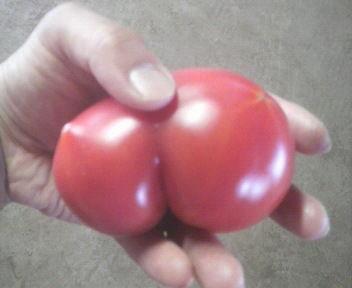 tomatomajikku4