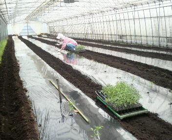 tomatoteishoku20121