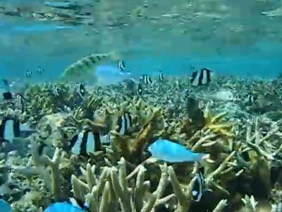 イパオビーチの魚たち