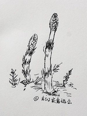 180318家禽土筆
