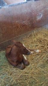 マキナ出産4