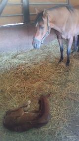 マキナ出産3