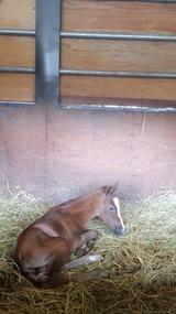 マキナ出産2