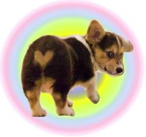 犬オーラ写真