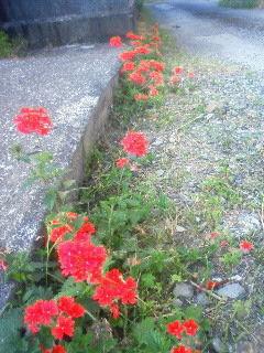 red flower3