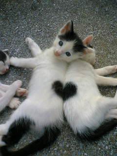 heart.cat