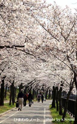 桜の会・平成の通り抜け。