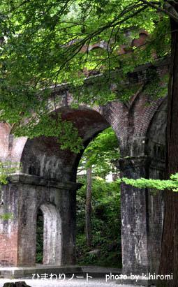 南禅寺の緑のもみじ。