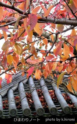 桜の紅葉。