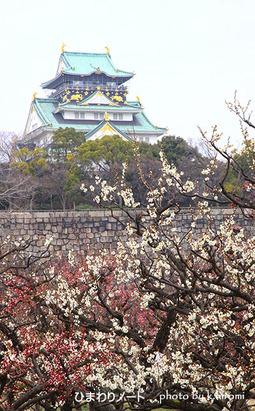 大阪城の梅。