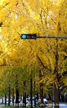 大阪御堂筋イチョウ並木。