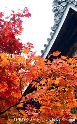 天龍寺の紅葉。