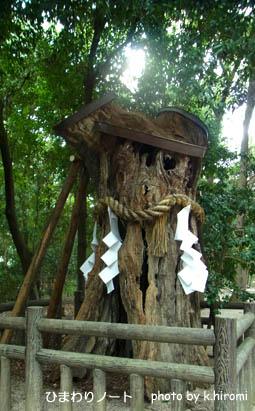 下鴨神社の御神木。