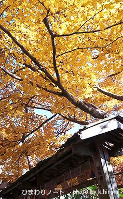 談山神社の紅葉。