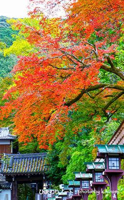 京都長楽寺。
