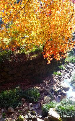 正暦寺の紅葉。