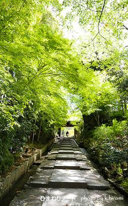 高台寺の新緑。
