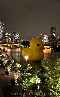 水都大阪2009・アヒル