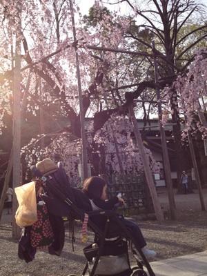 しだれ桜の前で。