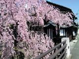 桜/1104171