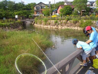 尾張旭市にある維摩池公園での魚釣り