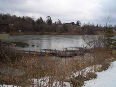 池に張られた氷
