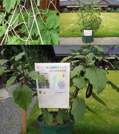 野菜の鉢植え