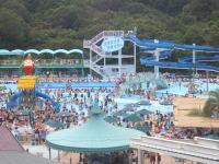 日本モンキーパークのプール