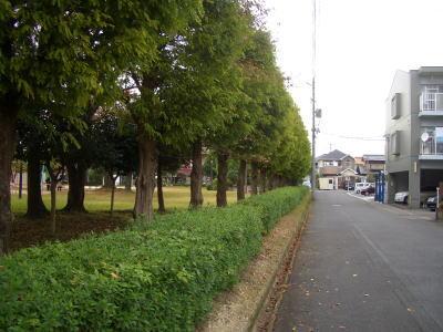 公園と道路の境の木立