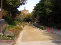 名城公園のジョギング道路