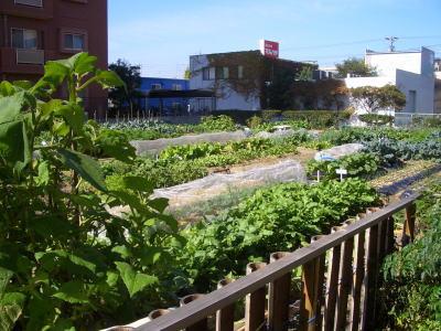 都会の中の畑