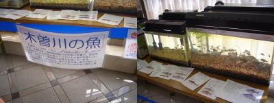 すいとぴあ江南の1階に展示されている木曽川の魚